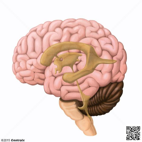 Aqueduto Cerebral