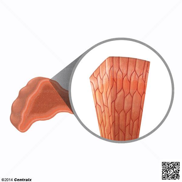 Células Cromafim