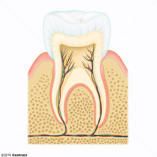 Esmalte Dentário