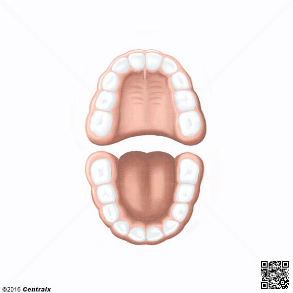 Dentição Primária