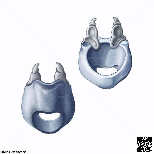 Cartilagem Cricóide