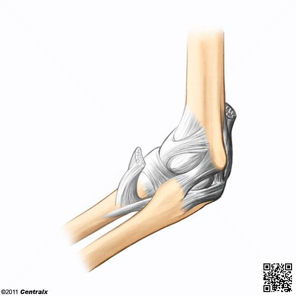 Articulação do Cotovelo