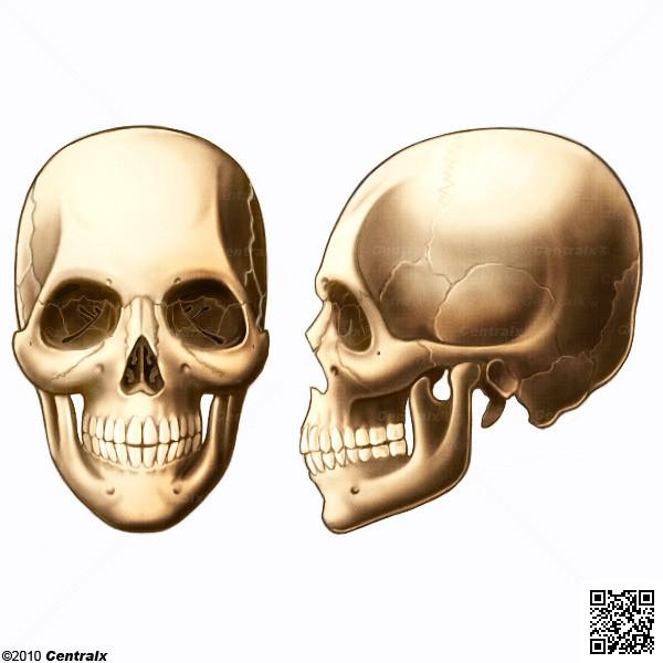 Cr 226 nio atlas de anatomia do corpo humano centralx