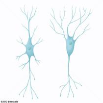 Interneurônios