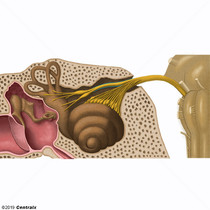 Nervo Vestibular