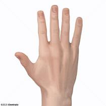 Mão (anatomia)