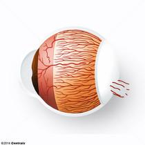 Artérias Ciliares