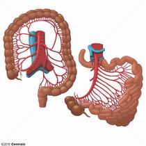 Artérias Mesentéricas