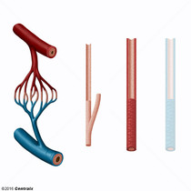 Arteríolas