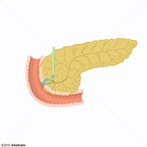 Esfíncter da Ampola Hepatopancreática