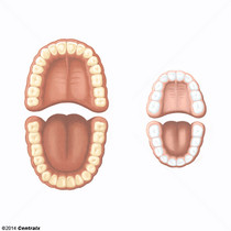 Arco Dental