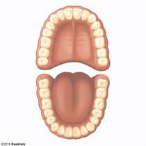 Dentição Permanente