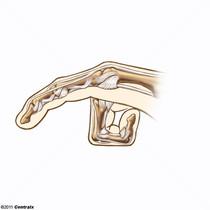 Articulações dos Dedos