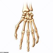 Ossos da Mão