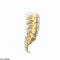 Ligamento Supra-espinhal