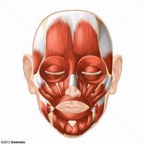 Músculos Faciais