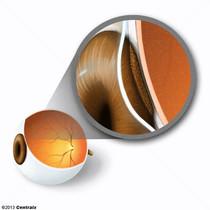 Epitélio Pigmentado Ocular